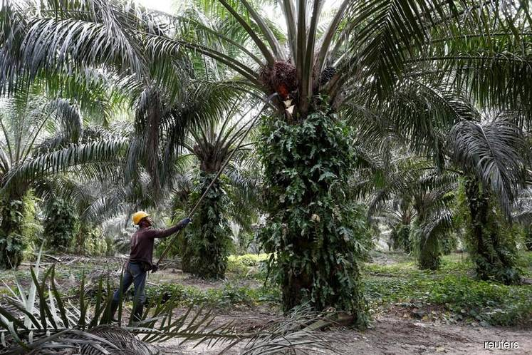 Malaysia delays largest palm oil conference to June — sources