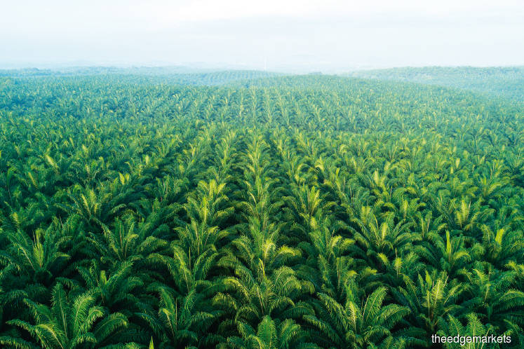 Curbing deforestation no easy task