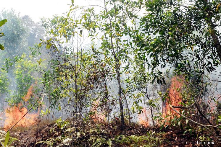 Selangor DoE steps up patrols to monitor open burning
