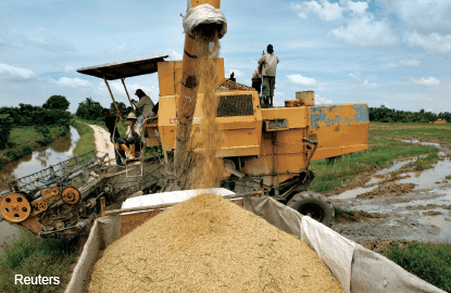 Has Halex ended rice import monopoly?