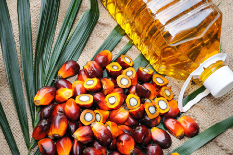 Palm oil bounces back on stronger crude