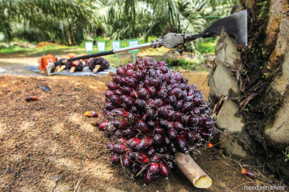 Malaysia's end-June palm oil stocks seen rising to nine-month high