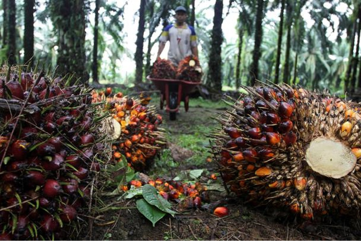 Palm oil purchases by India to soar as users shun pricey rivals