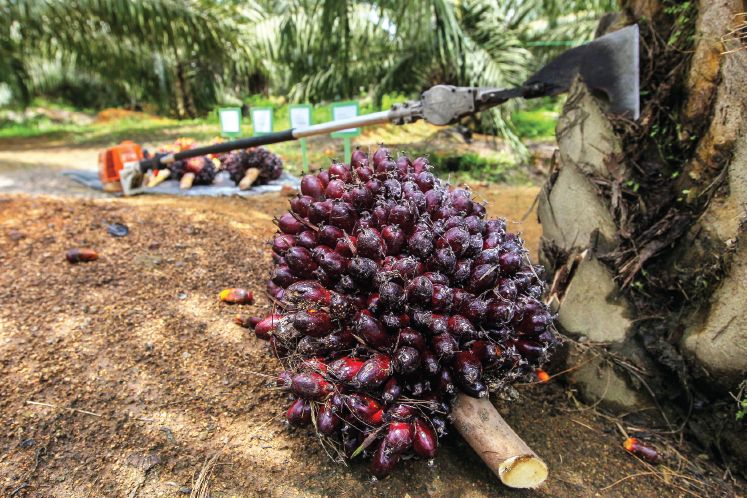 Palm oil demand expected to decline as consumers tighten belt in economic slowdown