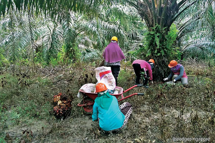 Indonesian agri businesses get a boost as government keeps zero palm oil export levy