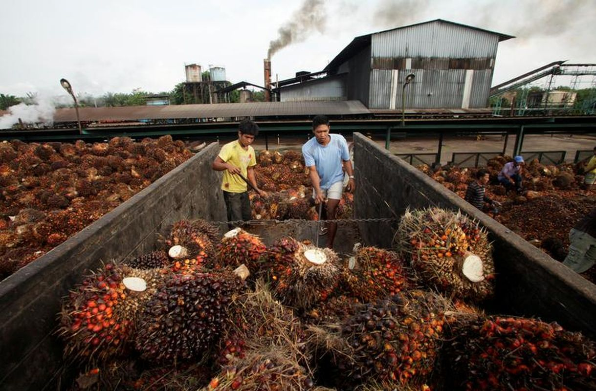 Indonesia to stop crude palm oil exports, maximises downstream industries