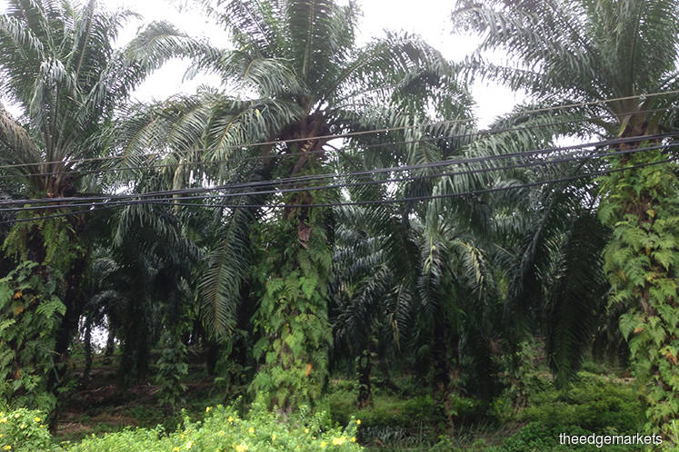 Palm oil's scorching rally about to burn its top customer