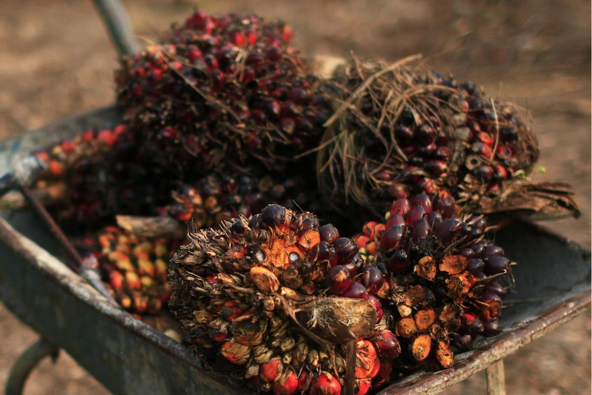 MPOC: Palm oil production to increase to 19.6 million tonnes in 2021