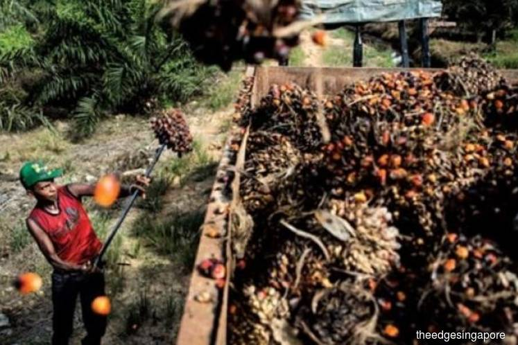 Olam announces third palm plantation to achieve RSPO certification