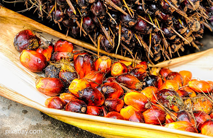 Palm oil rebounds on expectations of positive data