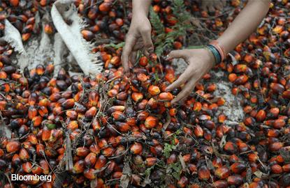 Palm oil snaps five-day winning streak as demand weakens