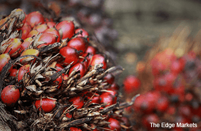 Palm oil to test support at RM2,820