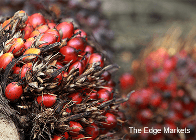 palm-oil_theedgemarkets