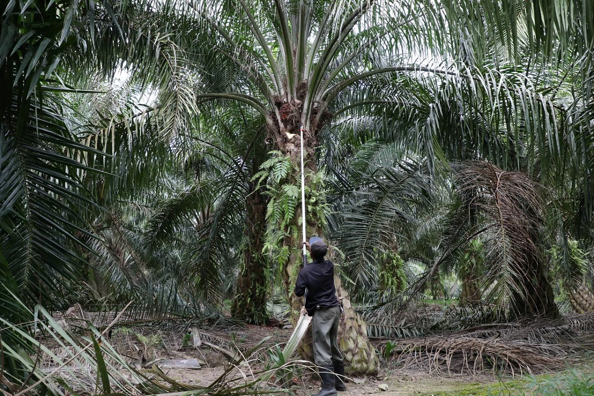 Indonesia, Malaysia eye joint campaign in Europe to counter palm oil critics