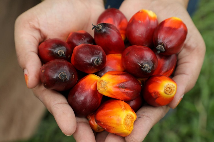 Malaysia June-end palm oil stocks seen down 4.9% as exports hit 10-month high