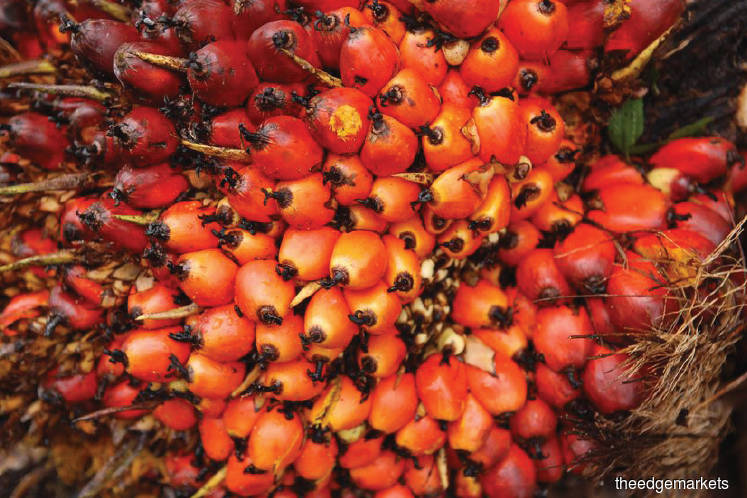 Special Report: Dealing with palm oil's naysayers