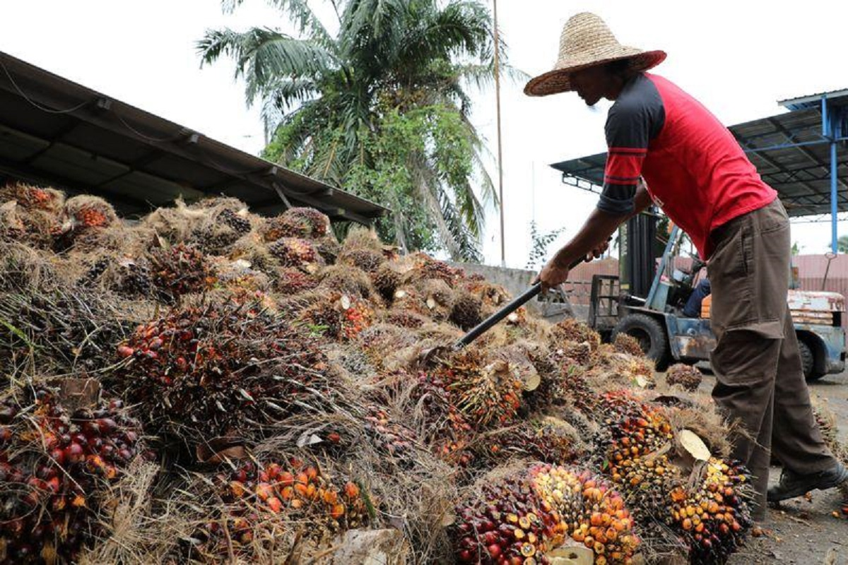 Malaysia's palm oil producers look to prisons, rehab centres to solve labour crunch