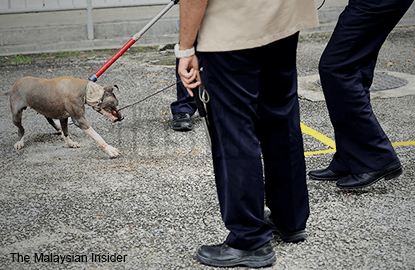 Penang stops killing of strays as no new rabies cases reported