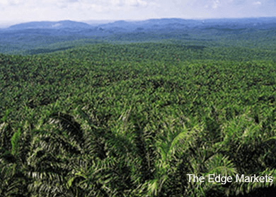 Increased palm oil exports due to better overseas demand