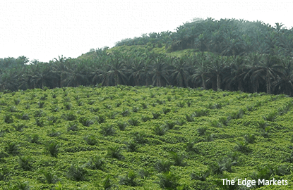 Plantation stocks plunge on low CPO forecast