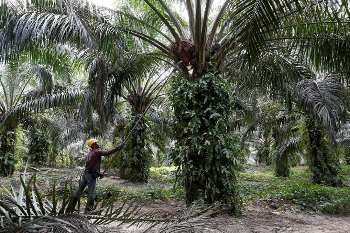 87.1% of areas under oil palm cultivation have achieved MSPO certification