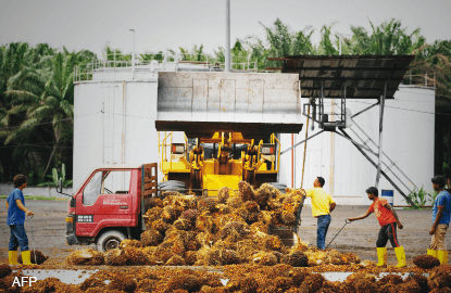 Higher minimum wage to have minimal impact on planters' operation cost