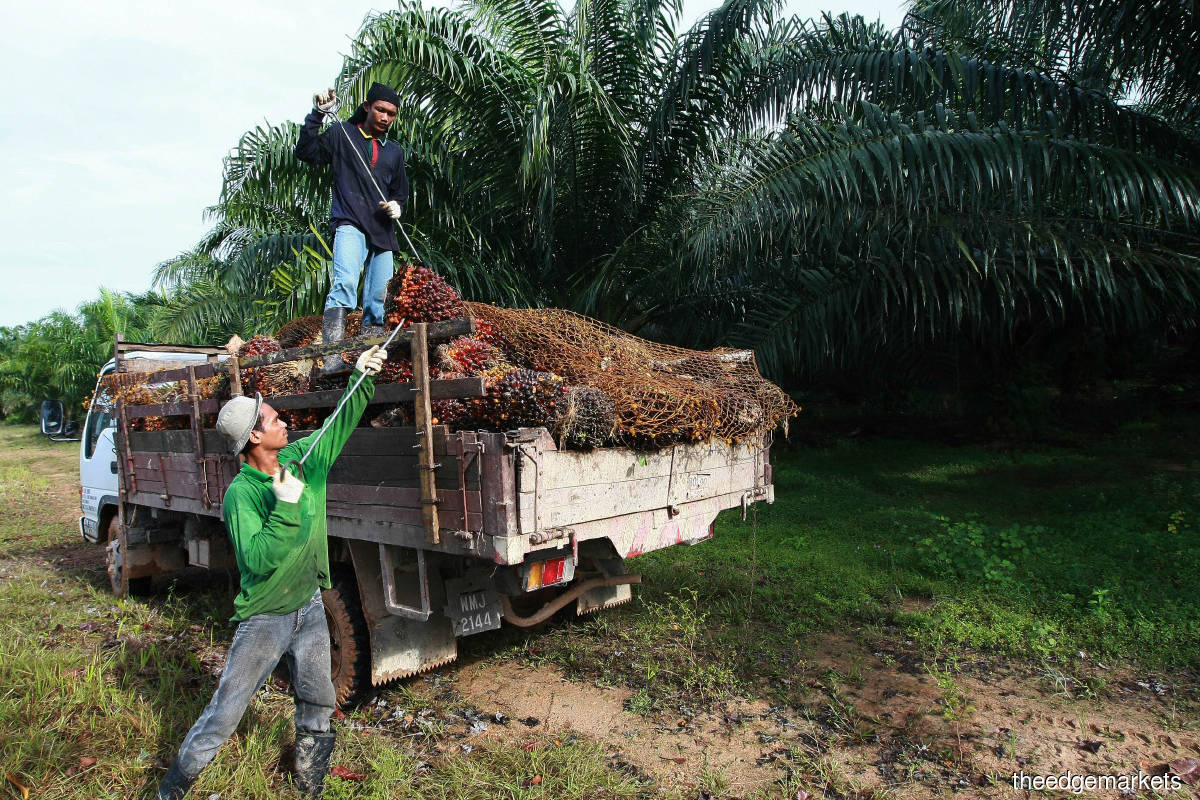 FELDA's Eagle High Plantations conundrum