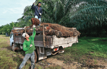 RSPO woes for planters