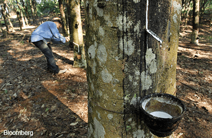 Global rubber output set to rise to 12.9 million tonnes in 2017 — IRSG