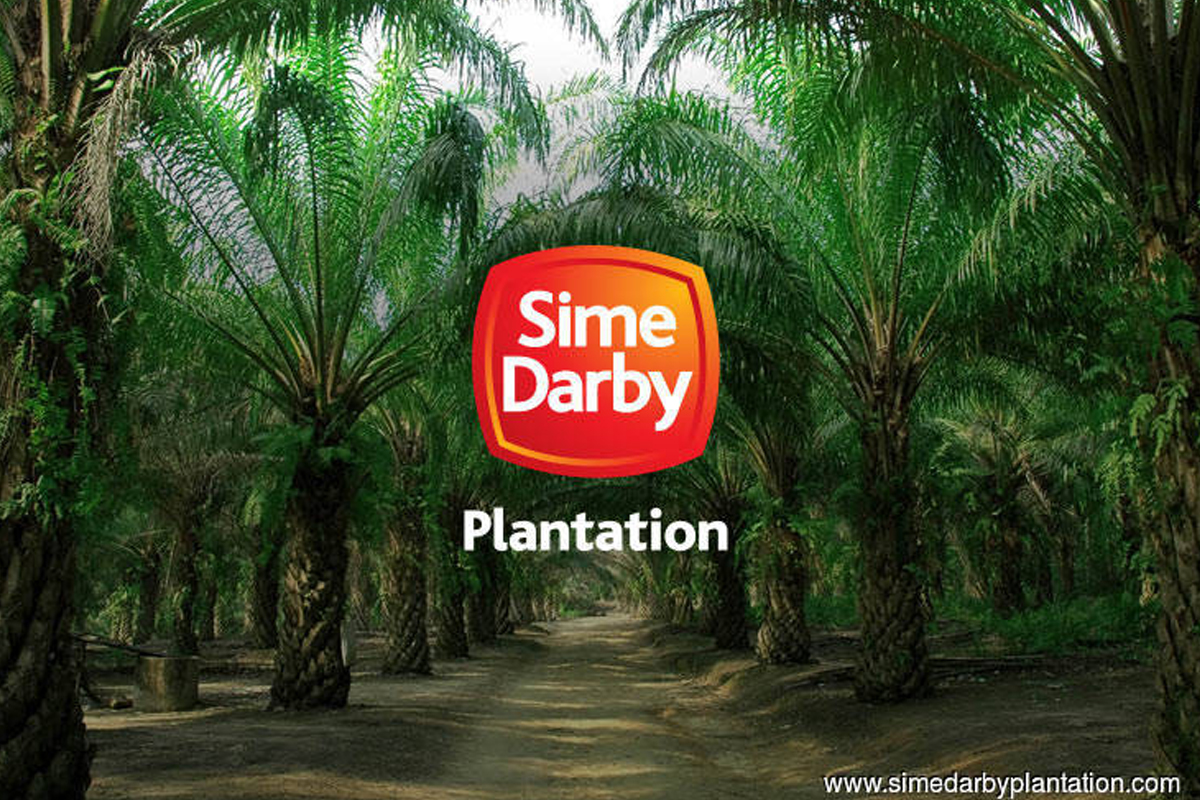 Sime Darby Plantation shares drop on news of resignations