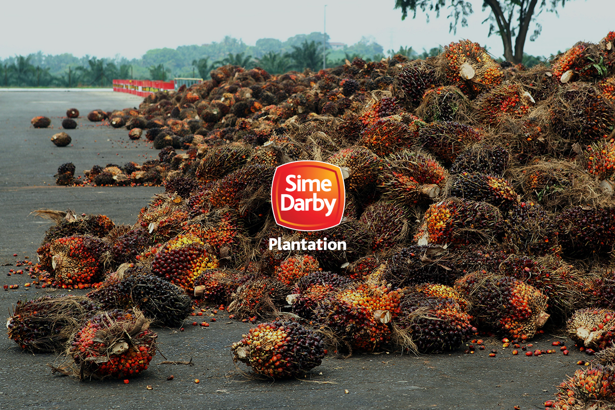 Sime Darby Plantation foreign shareholding fell to 9.47% in October 2020