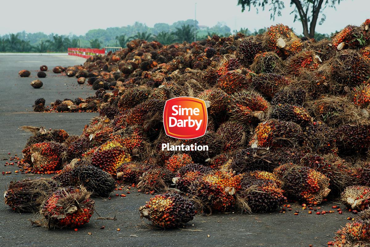 Sime Darby Plantation declares 2.13 sen special final dividend