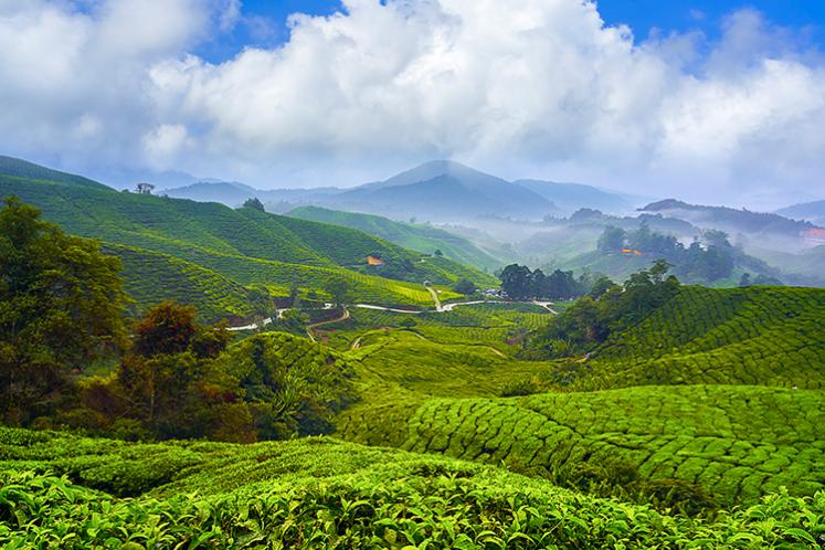 Cameron Highlands by-election to be held within 60 days