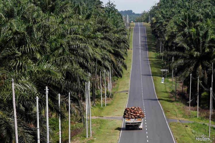 Months away from Malaysian election, EU's move stirs discontent in palm groves