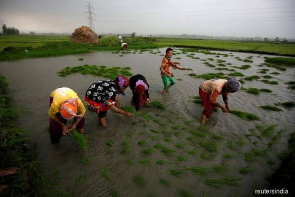 Asia Rice: India rates up on monsoon lull; flood threat looms in Thailand, Vietnam