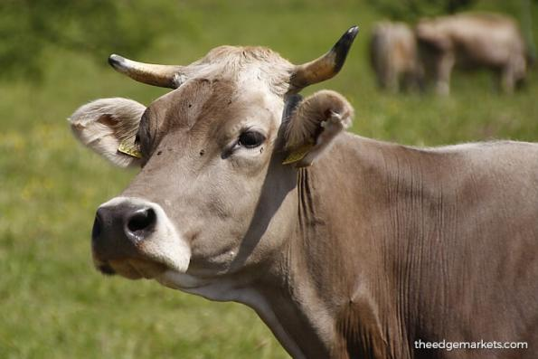 http://www.theedgemarkets.com/article/india-about-upend-global-beef-trade-shelley-goldberg