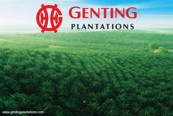 Strong FFB growth expected for Genting Plantations