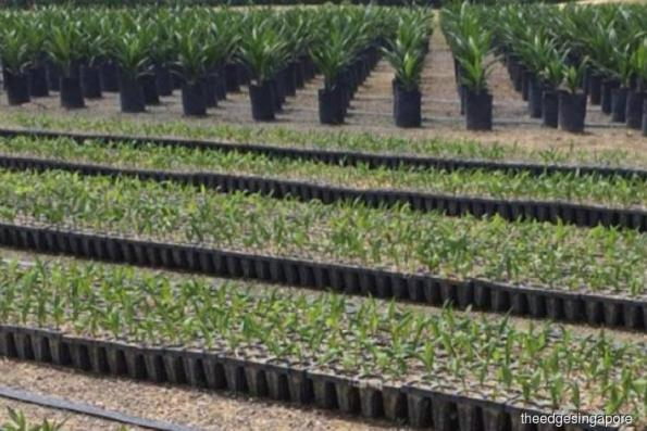 Golden Agri-Resources still under the weather: OCBC