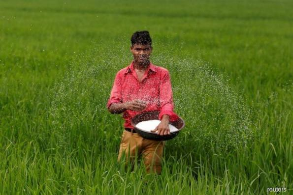 Asia Rice: Indian prices ease to lowest in a year as rupee slides
