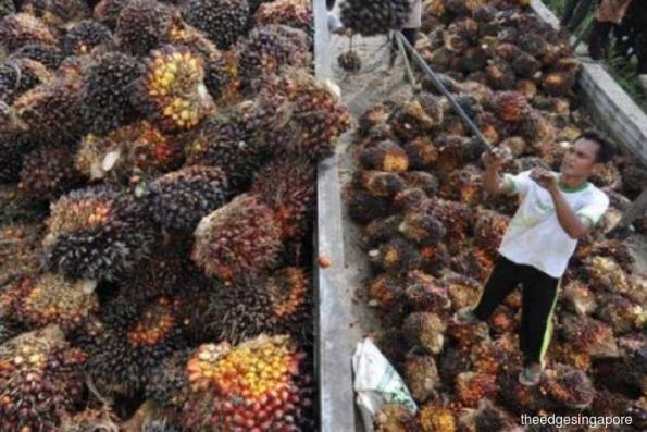IndoAgri's 1Q earnings plunge to S$4.8 mil on commodity price declines