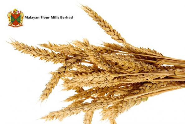 MFM 1Q net profit down 93.6% on higher wheat costs, lower poultry sales