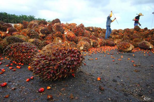 Palm oil may retrace to 2,176 ringgit