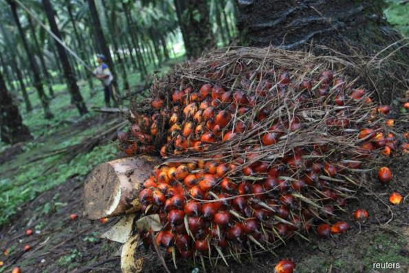 Palm oil may fall to RM1,933
