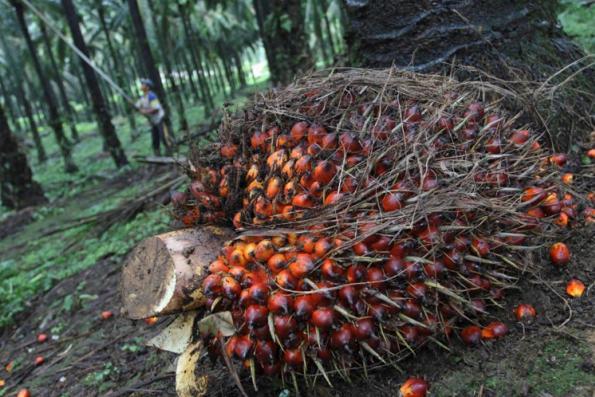 "Mah: EU's move against palm oil is ""unjustified and discriminatory"""