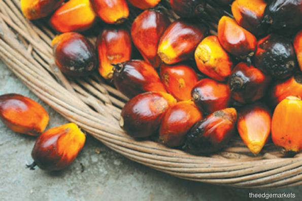 Sarawak Oil Palms 1Q results within expectations