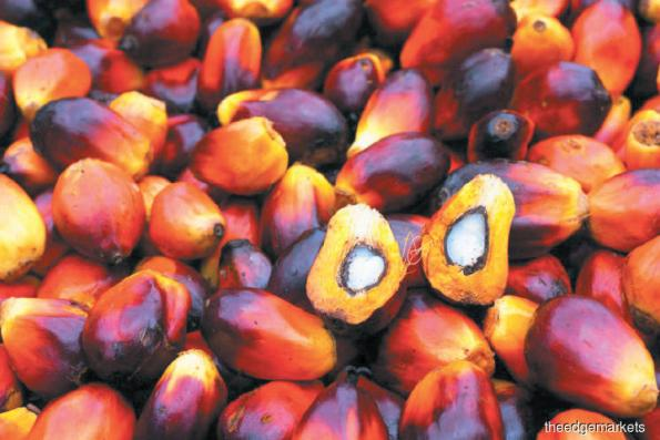 Palm oil slips on forecasts of output rise