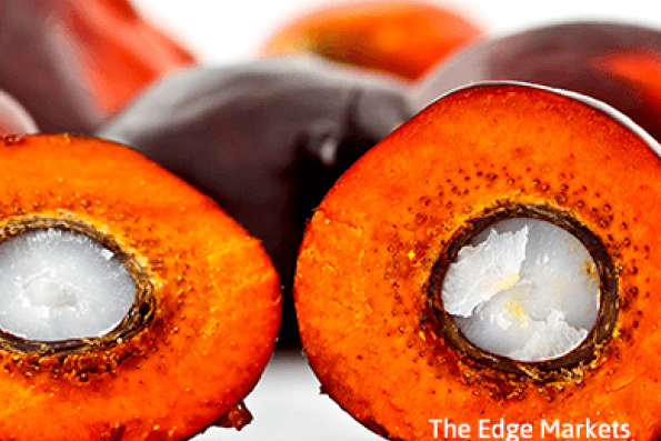 Palm oil to drop to 1,936 ringgit