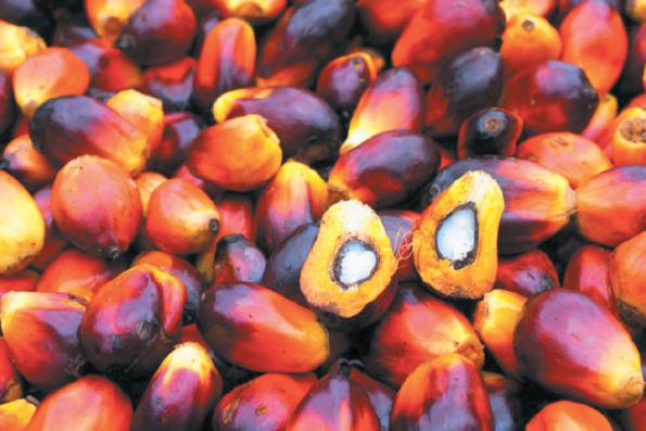 India raises import tax on palm oil to highest in a decade