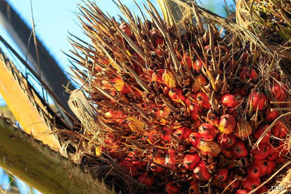 Malaysia's Oct 1-10 palm oil exports fall 39.3% — ITS