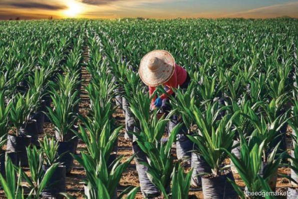 Hap Seng Plantations buys 55% of smaller rival Kretam
